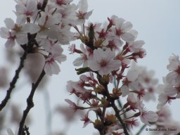 Blossoms up close