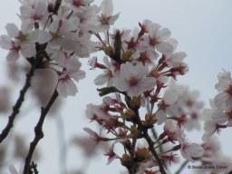 Blossoms up close