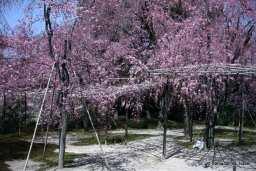 Heian Jingu Gardens, Kyoto