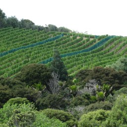 Some of the vineyards that dot the island