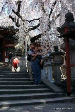 My very first cherry blossoms, Nara, 2001