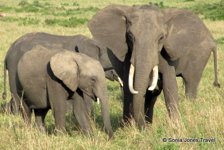 Contrasting Elephants