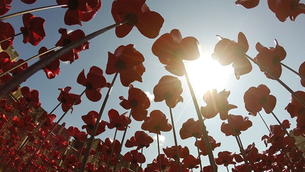 Poppies from below - looking through the field to the sky above