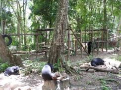 The bears enjoying their feast in the enclosure