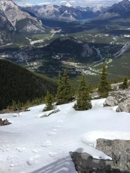 Bear tracks in the snow on Sulphur Mountain