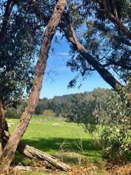 Adelaide Hills 2