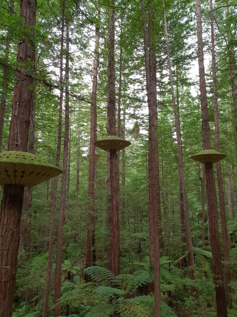 redwoods tree walk nz