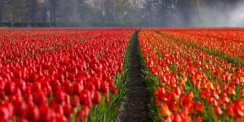 red field flowers garden
